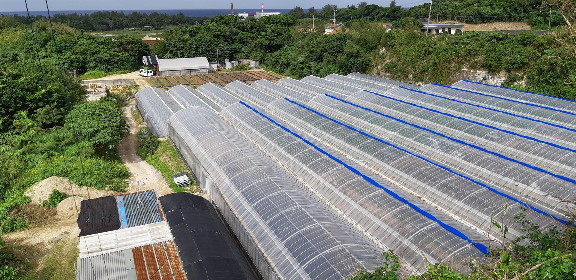 若松農園第1農場
